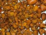 Cow ox gallstone for sale - photo 1