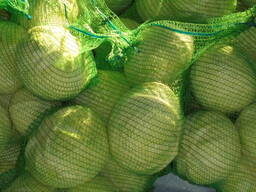 cabbage wholesale Kazakhstan