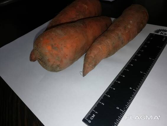 carrots wholesale Kazakhstan