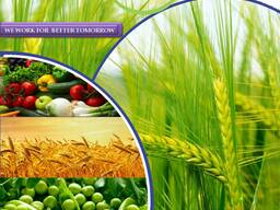 Pesticides manufacturer and supplier worldwide