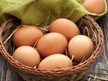 Яйцо Куриное - фото 5